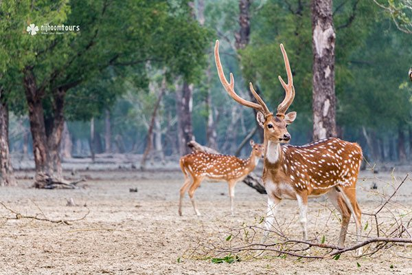 Sundarbans Mangrove Forest - Number one among the best places to visit in Bangladesh.