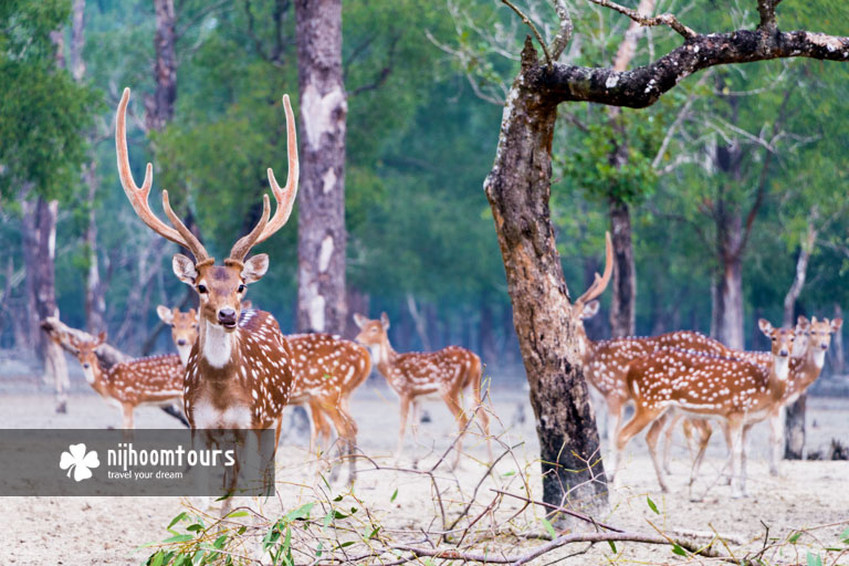 Sundarbans Mangrove Forest - number one among the best places to visit in Bangladesh