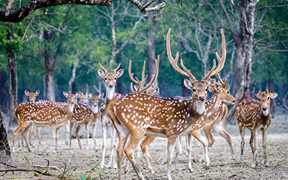 8 Days Sundarbans Safari Tour package in Bangladesh to experience the largest mangrove forest in the world